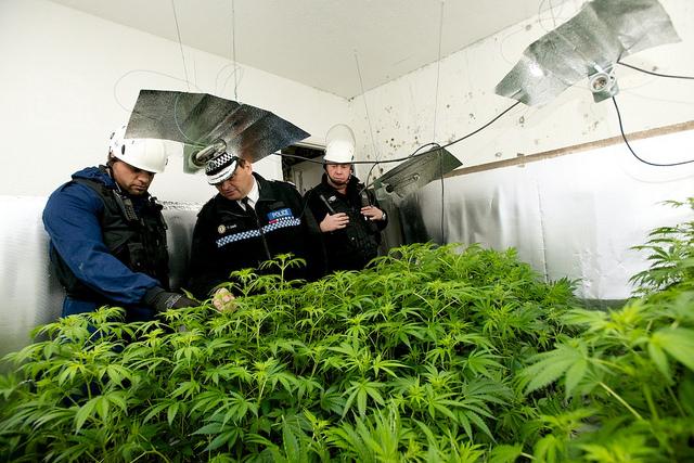 12.11.13 Cannabis